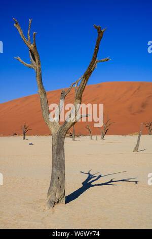 Portrait of a dead tree in Deadvlei, Namibia, with red dunes in background