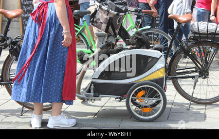 Poodle, perfectly styled by a dog groomer, standis in a bicycle trailer focusing his dog owner wearing a dirndl. - Stock Photo