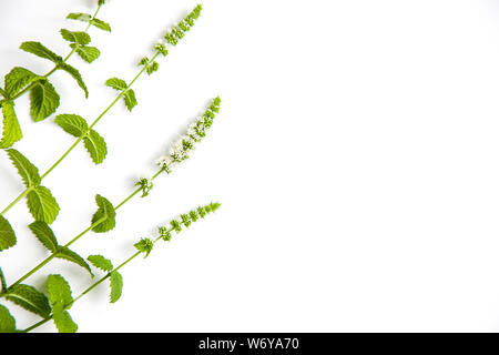mint grass with flowers close up on white background,copy space - Stock Photo