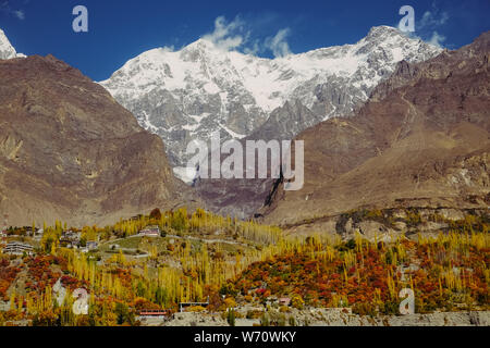 Autumn nature scenery of colorful trees in forest against snow capped Ultar Sar mountain peak in Karakoram range, Hunza Valley. Gilgit Baltistan, Paki - Stock Photo
