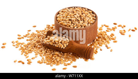 Wooden bowl and scoop of wheat grains, scattered wheat seeds isolated on white background with clipping path - Stock Photo