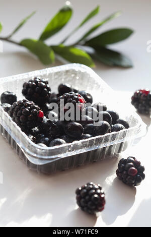blackberry in the summer, fresh ripe sweet blackcurrants on wight background, harvesting black currants berries, selective focus - Stock Photo