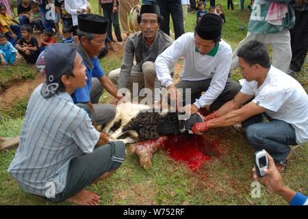 Bogor, West Java, Indonesia - August 2019 : A group of volunteer traditionally slaughter a sacrifical lamb in an underdeveloped village. - Stock Photo