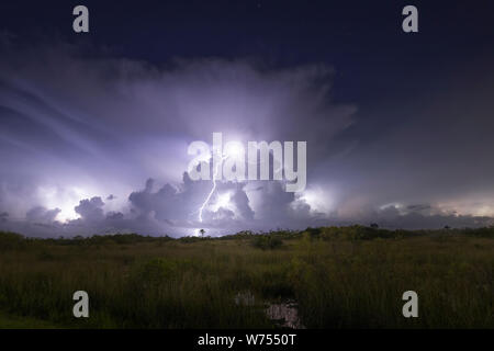 A lightning bolt strikes the ground during an electrical storm in Everglades National Park. - Stock Photo