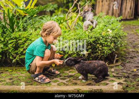 The boy feeds the rabbit. Cosmetics test on rabbit animal. Cruelty free and stop animal abuse concept - Stock Photo