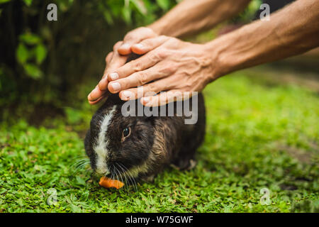Hands protect rabbit. Cosmetics test on rabbit animal. Cruelty free and stop animal abuse concept - Stock Photo