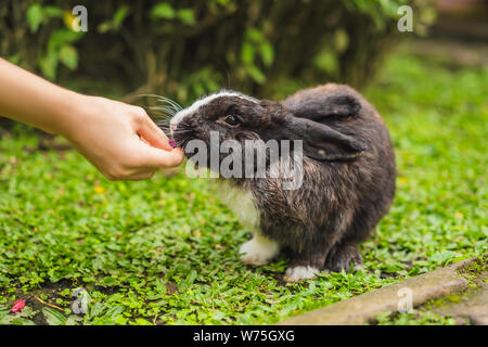 Hands feed the rabbit. Cosmetics test on rabbit animal. Cruelty free and stop animal abuse concept - Stock Photo