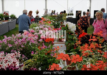 People examining flowers on display in the horticultural marquee at the Royal Welsh Show 2019, Builth Wells - Stock Photo