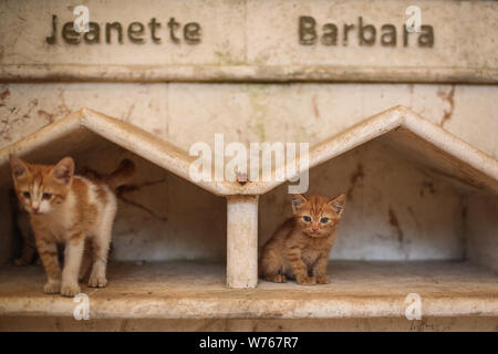 03 August 2019, Syria, Aleppo: Cats are seen at the shelters of the Ernesto's Cat Sanctuary, runned by Mohammed Alaa al-Jaleel, also known as 'the cat man of Aleppo'. During the Syrian war in 2012, Al-Jaleel was working as an ambulance driver in Aleppo, he used to drop off food for stray and abandoned cats on his way home after work. In 2015, he started to search for living cats in the war devastated areas and take them home, later in the year his compassionate work with cats gone viral and with the help of an Italian cat lover called Alessandra Abidin, he started to raise funds and receive do - Stock Photo