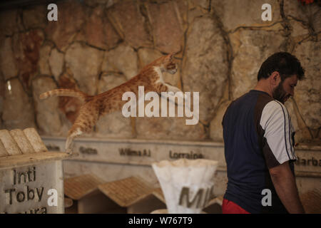 03 August 2019, Syria, Aleppo: Mohammed Alaa al-Jaleel, also known as 'the cat man of Aleppo' looks after cats at the Ernesto's Cat Sanctuary that he runs in Kafr Naya. During the Syrian war in 2012, Al-Jaleel was working as an ambulance driver in Aleppo, he used to drop off food for stray and abandoned cats on his way home after work. In 2015, he started to search for living cats in the war devastated areas and take them home, later in the year his compassionate work with cats gone viral and with the help of an Italian cat lover called Alessandra Abidin, he started to raise funds and receive - Stock Photo