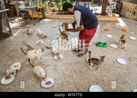 03 August 2019, Syria, Aleppo: Mohammed Alaa al-Jaleel, also known as 'the cat man of Aleppo' feeds cats at the Ernesto's Cat Sanctuary that he runs in Kafr Naya. During the Syrian war in 2012, Al-Jaleel was working as an ambulance driver in Aleppo, he used to drop off food for stray and abandoned cats on his way home after work. In 2015, he started to search for living cats in the war devastated areas and take them home, later in the year his compassionate work with cats gone viral and with the help of an Italian cat lover called Alessandra Abidin, he started to raise funds and receive donati - Stock Photo