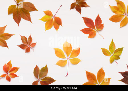 Colorful Grape leaves falling randomly over white background - Stock Photo