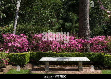 A peaceful place to rest among the azaleas at the Bayou Bend Collection and Gardens in the River Oaks neighborhood of Houston, Texas Physical description: 1 photograph: digital, tiff file, color.  Notes: Over 50 years, philanthropist and art collector Ima Hogg amassed a collection of American paintings and decorative pieces throughout Bayou Bend, the house along a turn in Buffalo Bayou, where she lived from 1928 to 1965. Miss Hogg later donated her chome collection, and gardens to the Museum of Fine Arts, Houston.; Title, date, and keywords based on information provided by the photographer.; - Stock Photo