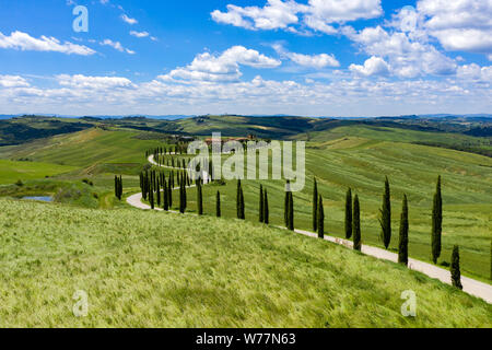 Rolling hills of Tuscany, Italy, on a sunny summers day. Cypress trees line a dirt road leading towards a small collection of houses deep in the count - Stock Photo