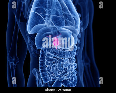 3d rendered medically accurate illustration of the gallbladder - Stock Photo