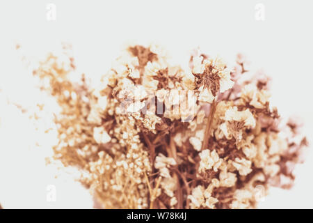 Dry color grass flower for interior decoration. Flower. Bouquet of lavender at home, shadow of flowers in wall, coziness