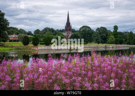Rosebay Willowherb (Chamaenerion angustifolium) across the lake from the Church of St. Mary the Virgin, Clumber Park, Nottinghamshire, UK - Stock Photo