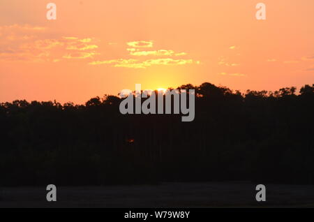 SOUTHERN PEACH SKIES A beautiful sunrise ascends above a forest off the Vernon river marsh in Savannah, Georgia. - Stock Photo