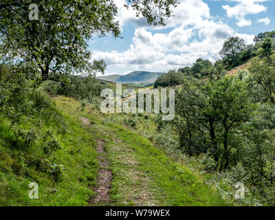 Smardale Gill National Nature Reserve near Kirkby Stephen in the northern Pennines of Cumbria UK - Stock Photo