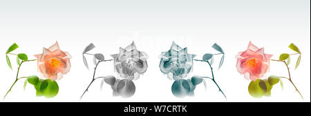 High resolution floral panoramic photographic montage of Rose flower. Each image has been individually colour graded. - Stock Photo