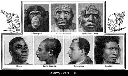 Nature's evolutionary designs in noses, 1922. Artist: Unknown - Stock Photo