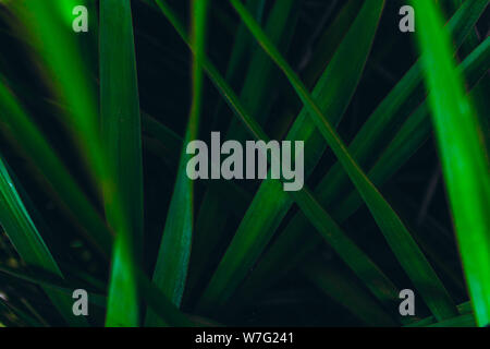 Creative layout made of green leaves. Green leaves pattern background. - Stock Photo