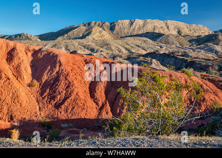 Creosote bush, rock formations, unnamed hills, view from Northshore Road, Lake Mead National Recreation Area, Nevada, USA - Stock Photo