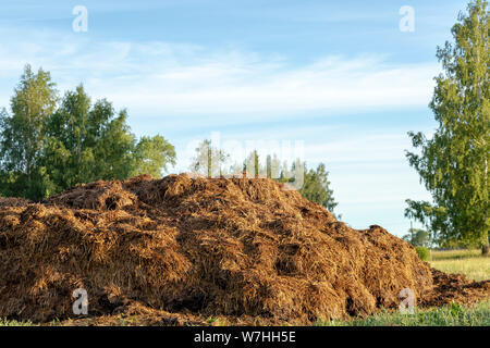 Manure on the Farmyard. Close up of heap of dung in green field on the farm yard, Traditional rural scene in countryside at sunrise - Stock Photo