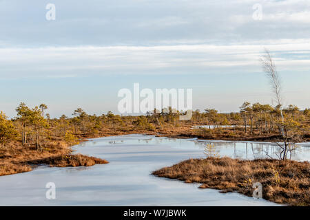 Swamp with frosty ground, ice on bog lake and poor marsh vegetation – freeze temperatures in moor and autumn colored flora at sunset - Stock Photo