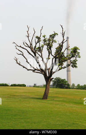 Bare tree in a park with smoke emitting from a smoke stack in the background - Stock Photo