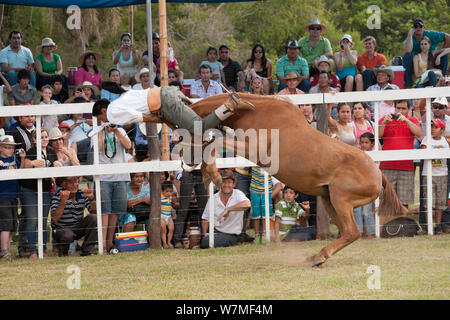 Cowboy Riding Bucking Bronco Horse During The National