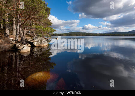 Loch Garten, Strathspey, Cairngorms National Park, Scotland. March 2012 - Stock Photo