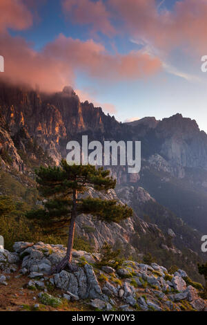 The Col de Bavella with Pine tree at dawn, Corsica, France. June 2011 - Stock Photo