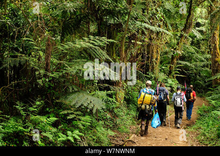 People hiking through tropical forest on lower slopes of Mount Kilimanjaro, Tanzania, October 2008 - Stock Photo