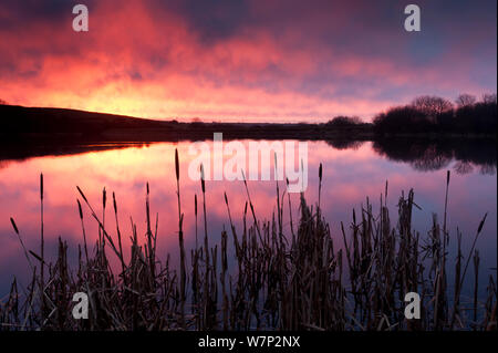 Lower Tamar Lake, at sunrise, reflections and reeds, north Cornwall/Devon border, UK. January - Stock Photo