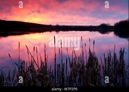 Lower Tamar Lake, colopurful sunrise, reflections and reeds, North Cornwall / Devon border, UK. January 2012. - Stock Photo
