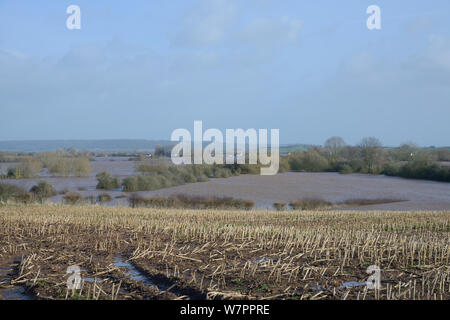 Waterlogged Maize (Zea mays) stubble field and heavily flooded Curry Moor after weeks of heavy rain, viewed from East Lyng with Curload village in the background, Somerset Levels and Moors, UK, January 2013. - Stock Photo