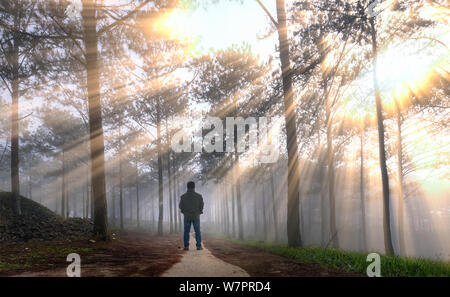 Silhouette of man in the pine forest in the morning sun rays through trees. Beautiful forest with natural light from the sun and fog - Stock Photo
