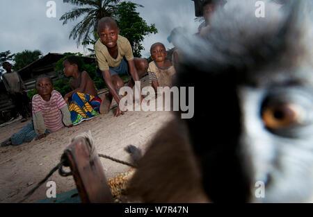 Grey-cheeked Mangabey (Lophocebus albigena) juvenile and village children looking on. Captive, kept as a pet until large enough to be eaten. Bayanga near Dzanga-Ndoki National Park, Central African Republic. - Stock Photo