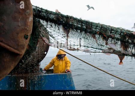 Fisherman hauling back trawler net on fishing trawler. Stellwagen Banks, New England, United States, North Atlantic Ocean Model released. - Stock Photo