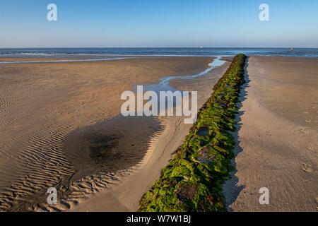 ebb sand beach in norderney, travel germany wattenmeer - Stock Photo