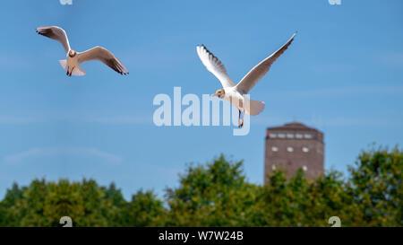 sea gull on island norderney, travel germany - Stock Photo