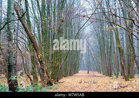cloudy forest in autumn, fog in the spring forest