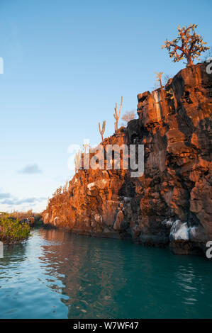 Basaltic cliff bordering Puerto Ayora Harbour, Academy Bay, Santa Cruz Island, Galapagos Islands, June 2009. - Stock Photo