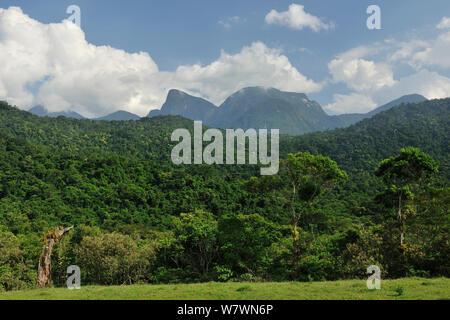 Atlantic Rainforest, REGUA - Reserva Ecologica Guapiacu, Cachoeiras de Macacu, Rio de Janeiro State, Southeastern Brazil, February. - Stock Photo