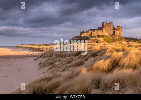 Bamburgh Castle and sand dunes in warm, late evening light with stormy evening sky, Bamburgh, Northumberland, UK. March 2014. - Stock Photo