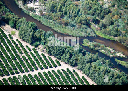 Aerial photograph of the Olifants River showing the intensive agriculture along its course, a threat to the endemic fish species found here. Citrusdal and Clanwilliam area, Western Cape, South Africa. December 2013. - Stock Photo