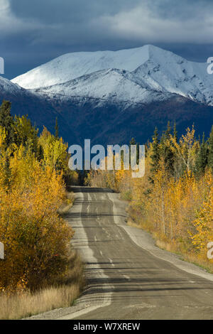 Road to Keno, with snow capped mountain and Quaking aspen (Populus tremuloides) Silver Trail near Mayo, Yukon Territories, Canada, September 2013. - Stock Photo