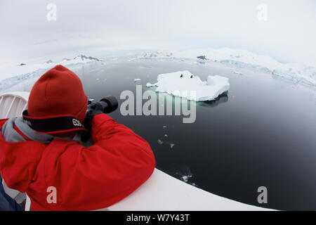 Russell Laman photographing Crabeater seals (Lobodon carcinophaga) on iceberg, The Gullet, Adelaide Island vicinity, Antarctica, February 2011. Model released. - Stock Photo
