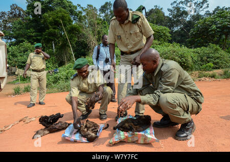 Guards with confiscated bushmeat including carcasses of duiker and monkey. Yengo Eco Guard control point, Odzala-Kokoua National Park. Republic of Congo (Congo-Brazzaville), Africa, June 2013. - Stock Photo